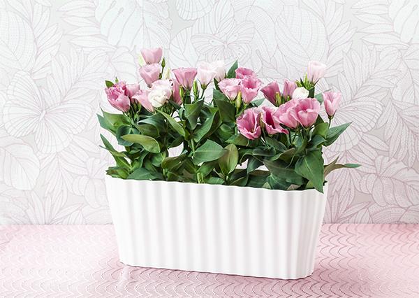 кашпо TRIOLA с цветами